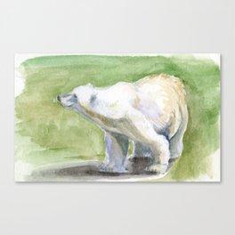 Posed Polar Bear Canvas Print