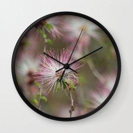 Desert fairy dusters Wall Clock