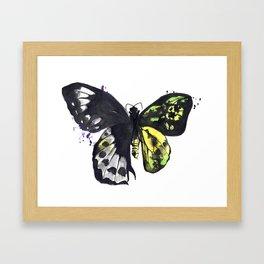 Bilateral Gynandromorph Framed Art Print