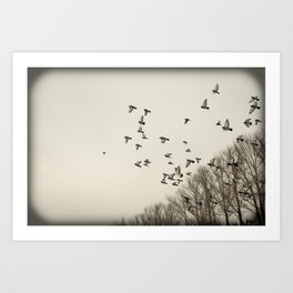 inhabitants of the sky-2 Art Print