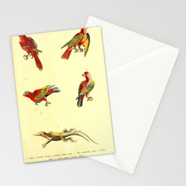 Black Capped Lory Red Breasted Lory Scarlet Lory Long Tailed Scarlet Lory14 Stationery Cards