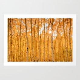 AUTUMN ASPENS OF COLORADO Art Print