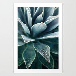 Agave Rain #1 Art Print