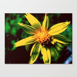 Vintage Yellow Flower Canvas Print