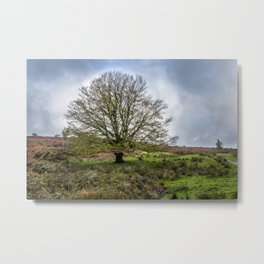 Single Exmoor Tree Metal Print