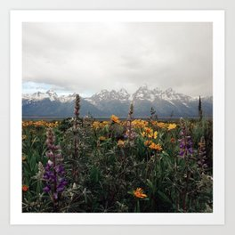 Wildflowers and Mountains - Summer in the Tetons Art Print