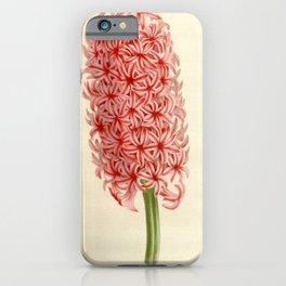 Flower hyacinthus 318 iPhone Case