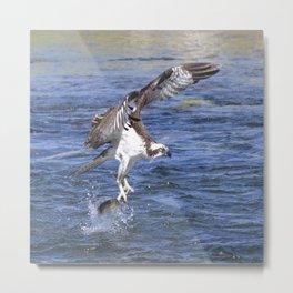 Watercolor Bird, Osprey 12, Yellowstone, Wyoming Metal Print