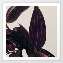 Lily Love Lila Art Print
