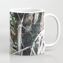 Squirrel in Tree Coffee Mug