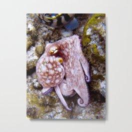 Octopus at Eel Garden Metal Print