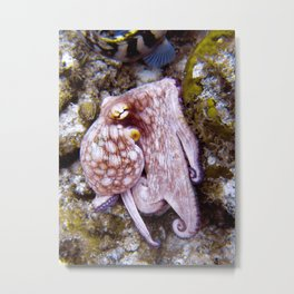 Octopus at Eel Garden Metal Print