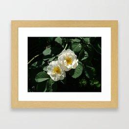 Flower Pic 3 Framed Art Print