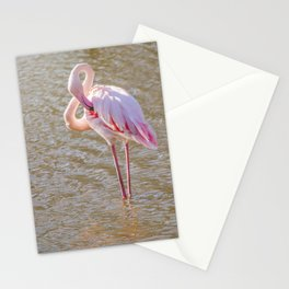 Pink Flamingo, Greater flamingo in their natural environment (Phoenicopterus roseus) Stationery Cards