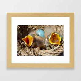 Baby Robins 1 Framed Art Print