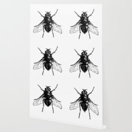 black and white fly Wallpaper