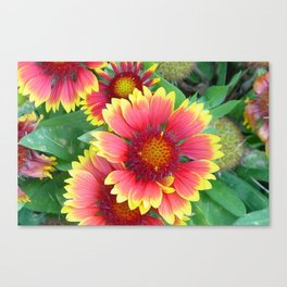 Beauty in Bloom 10 Canvas Print