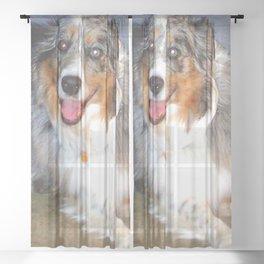 Australian Shepherd Sheer Curtain
