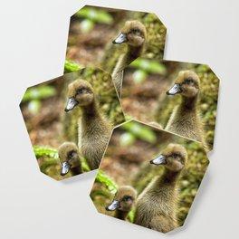 Indian Runner Ducklings No. 1 Coaster