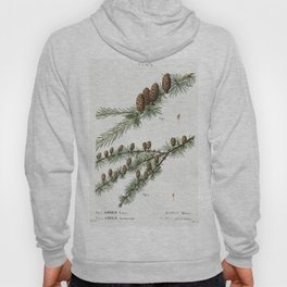 1 Red pine (Pinus rubra) 2 Black pine (Pinus Laricio) 3 Jack pine (Pinus Banksiana) 4 Mountain pine Hoody