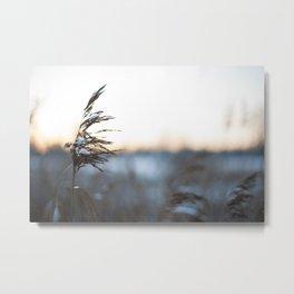 Cold sunset Metal Print