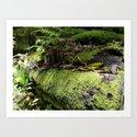 Rainforest Ferns & Moss by oldurbanfarmhouse