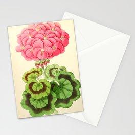 Andrews, James (1801-1876) - The Floral Magazine 1869 - Geranium Miss Martin Stationery Cards