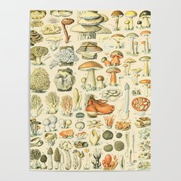 Mushroom Diagram // Champignons II XL by Adolphe Millot 19th Century Science Textbook Artwork Poster
