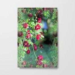 Waterfall Of Roses Metal Print