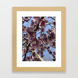 A Sky Full of Cherry Blossoms Framed Art Print