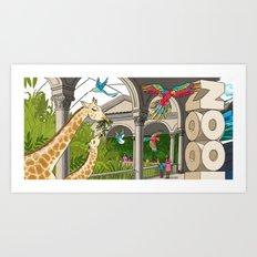 St. Louis Zoo Giraffes Art Print