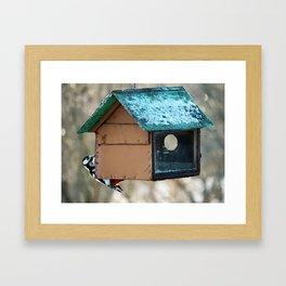 Woodpecker on feeder in winter day. Wildlife. Nature photography. Wild bird outdoors. Framed Art Print