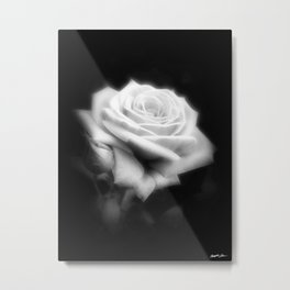 Pink Roses in Anzures 3 Dark Metal Print