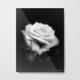 Pink Roses in Anzures 3 Dark Metal Print