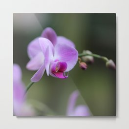 Purple Orchid - Flower Photography Metal Print