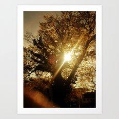 Sunset Behind the Tree Art Print