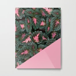 Pink on Coleus Plant Metal Print