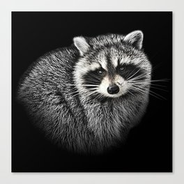A Gentle Raccoon Canvas Print