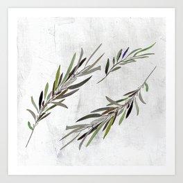 Eucalyptus Leaves White Art Print