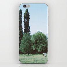 pretty little horses iPhone & iPod Skin