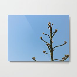 Simple Plant and Blue Sky Metal Print