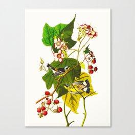 Black and Yellow Warbler Bird Canvas Print