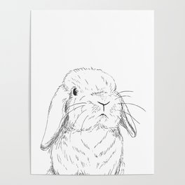 Curious Holland Lop Bunny Poster