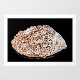 Pearl shell on bright black background Art Print