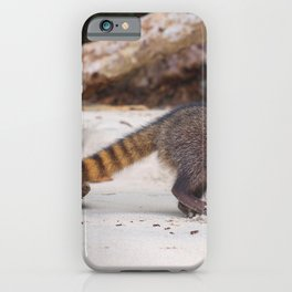 Funny wild racoon feeding in Costa Rica iPhone Case