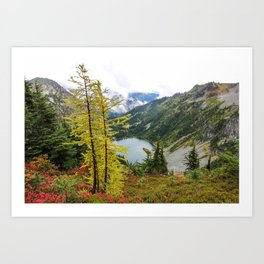 Larch Trees at Maple Pass Art Print
