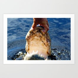 Gator Jaws Art Print