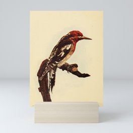 Red breasted Sapsucker sphyrapicus ruber13 Mini Art Print