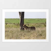 Lioness landscape, serengeti national park, tanzania Art Print