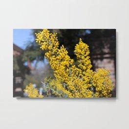 Spring in Yellow Metal Print
